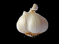 garlic-744611_1920